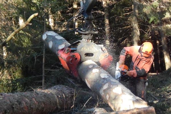 taglio del legno nella foresta
